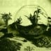 Terrariums: Gardens under glass (1971)