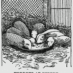 How ferrets are useful (1899)