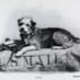 Owney: True tales of the postal dog (1894)