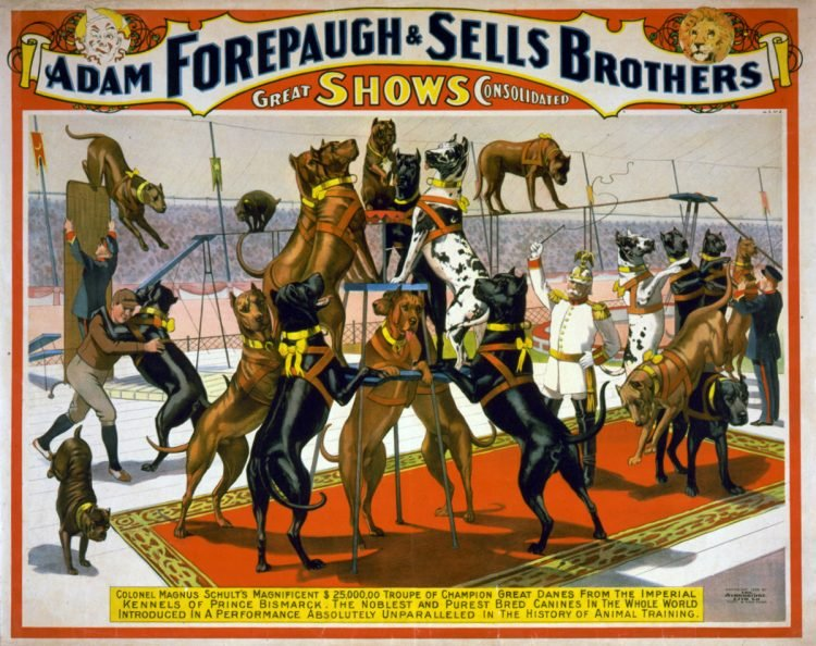 Adam Forepaugh and Sells Brothers great shows consolidated