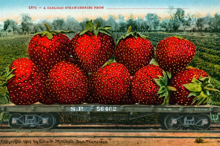 1909 food Railroad freight car filled with gigantic strawberries