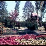 World's Fair 1939: Holland Pavilion garden I