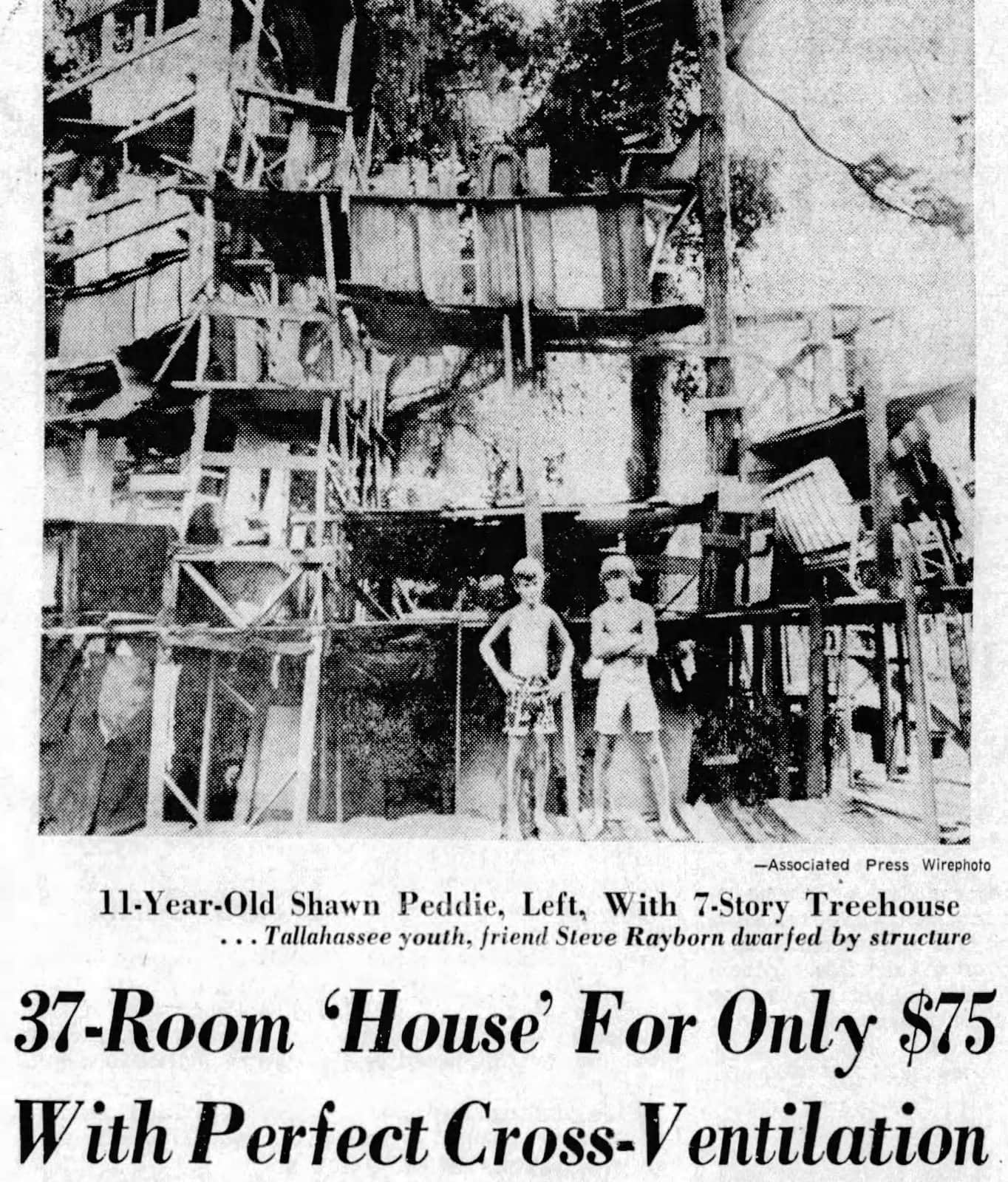 A huge tree house in Florida built by Shawn Peddie and friends in Florida (1973)