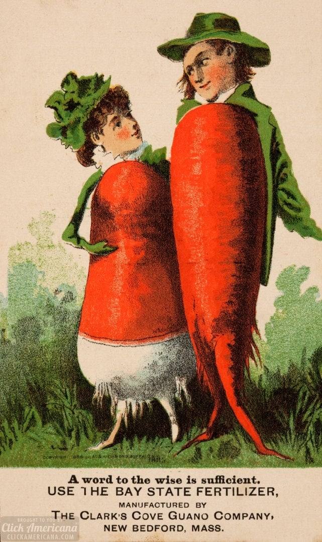 A root vegetable couple - Victorian trade card from c1887