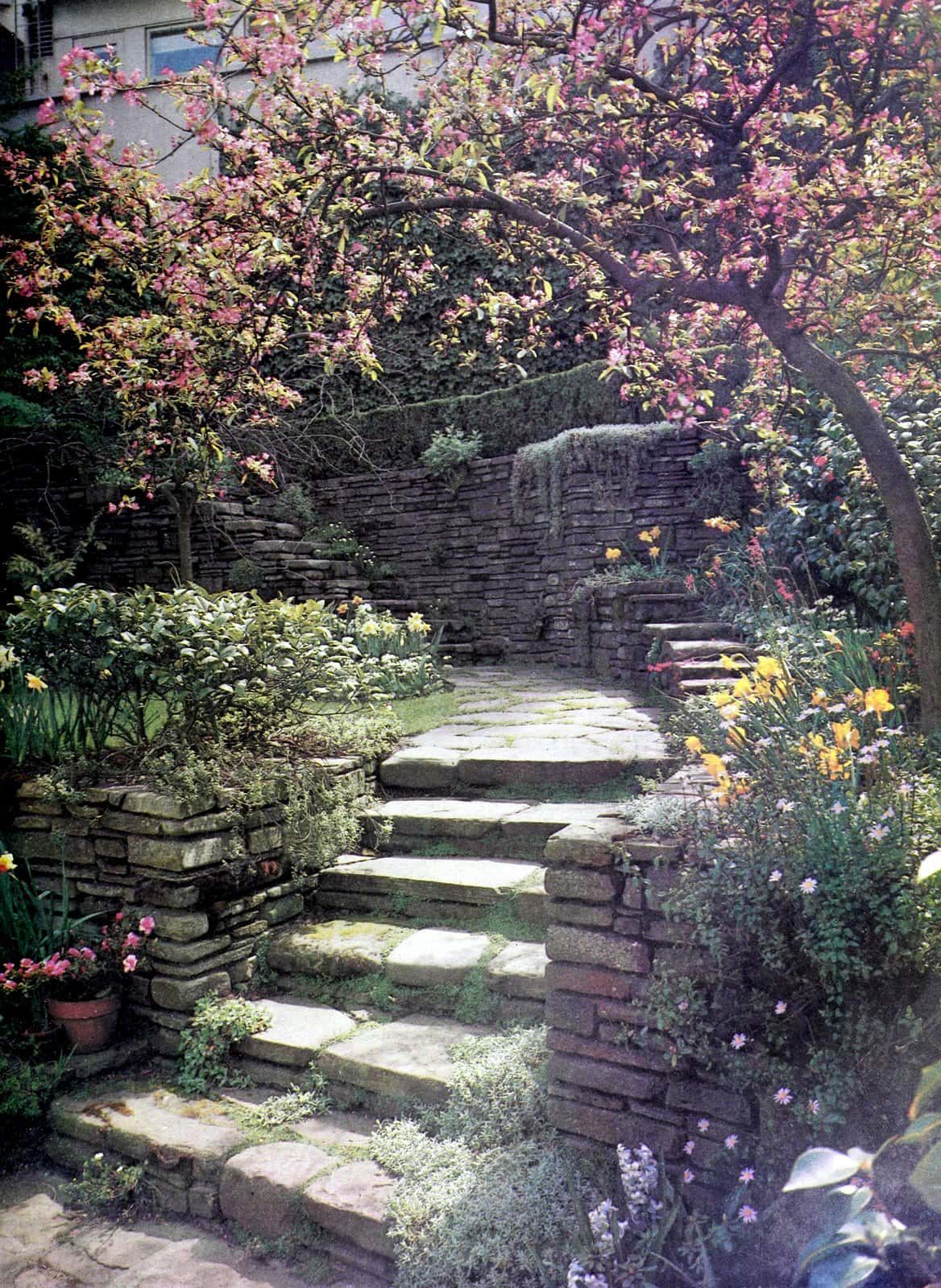 A walled garden overflowing with flowers and plants (1962)