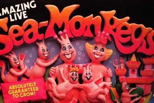 Amazing Live Sea Monkeys