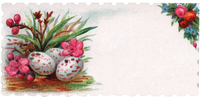 Antique calling card with bird eggs