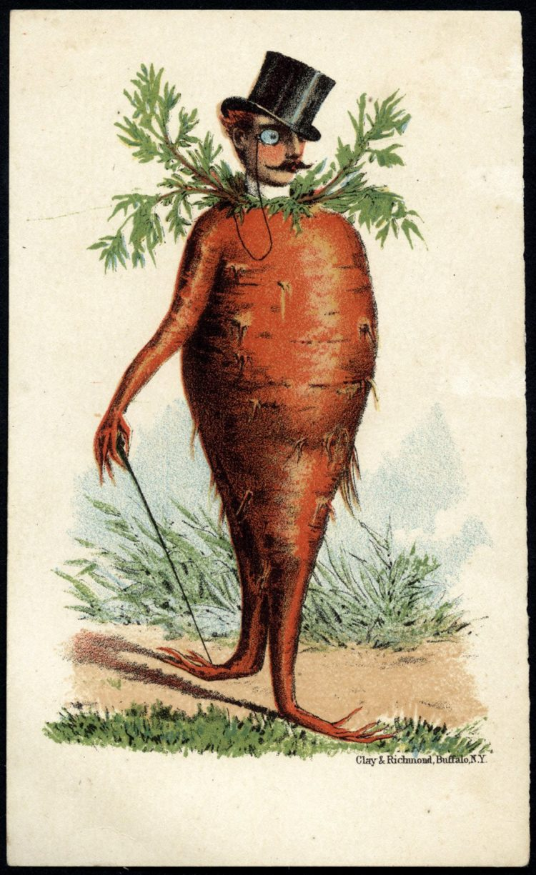 Trade cards with people as vegetables from the 1800s - Man's head on a carrot body