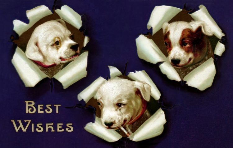 Best wishes from cute dogs - Vintage postcard