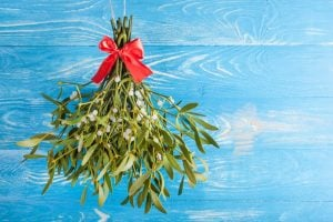 Mistletoe close up