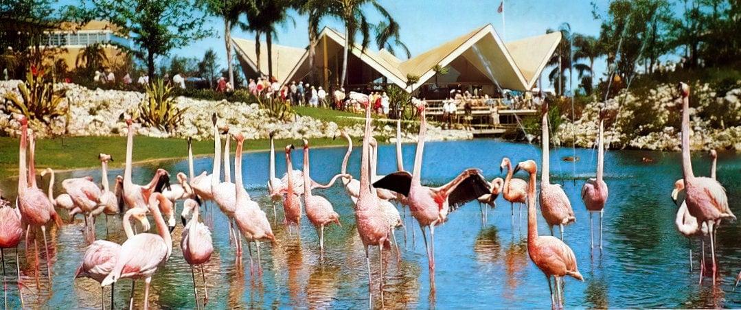 Busch Gardens opening - Vintage 1959 postcard set