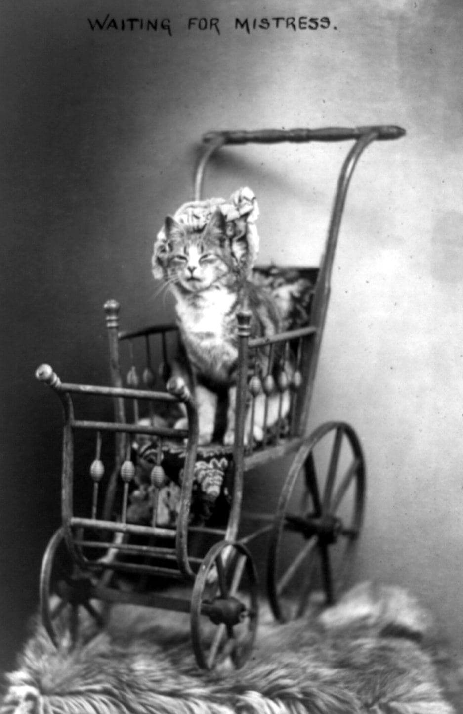 Cat in a vintage wood baby carriage