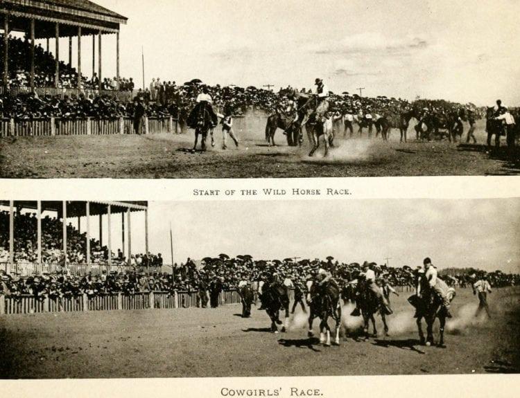 Start of the wild horse race