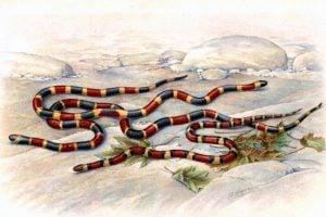From Snake Venoms, by Hideyo Noguchi (1909)
