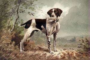 Dog lithograph by Herman Bencke (c1879)