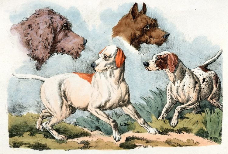 Dog portraits from 1818