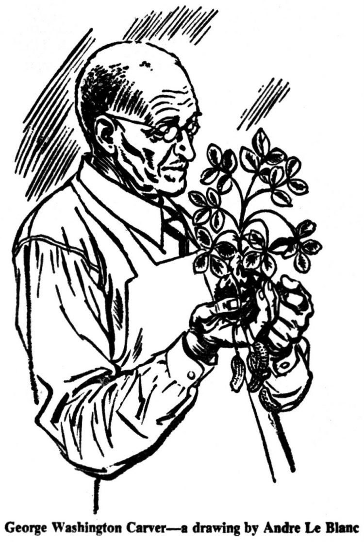 Drawing of George Washington Carver with a plant
