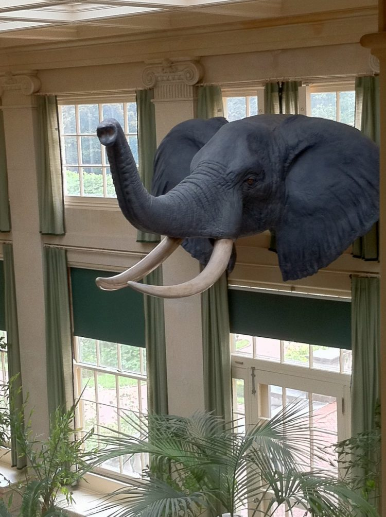Elephant in conservatory at Eastman House museum - New York