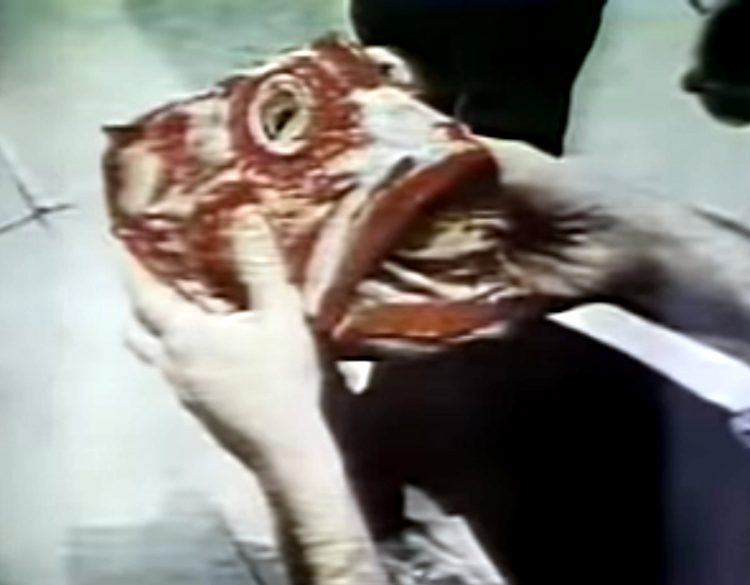 Fish Heads video - Barnes and Barnes (1)