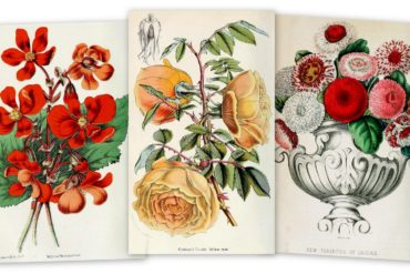 Floral gifts New Year's flower meanings (1897)