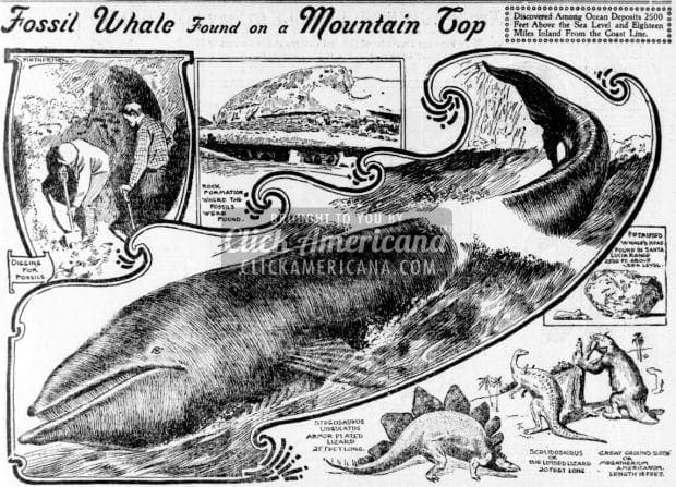 Fossil whale found on mountain top 1899