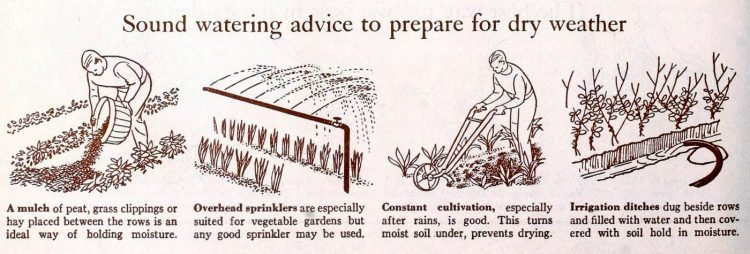 Garden watering advice from 1942