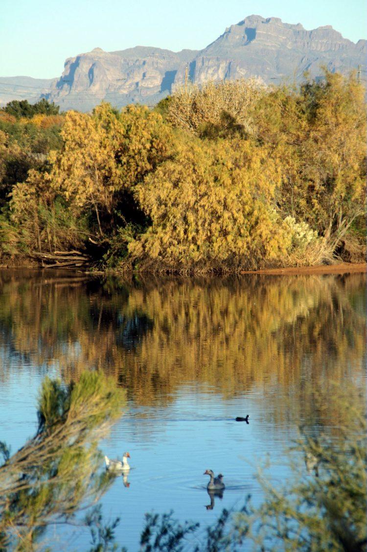 Gilbert Arizona - Riparian preserve