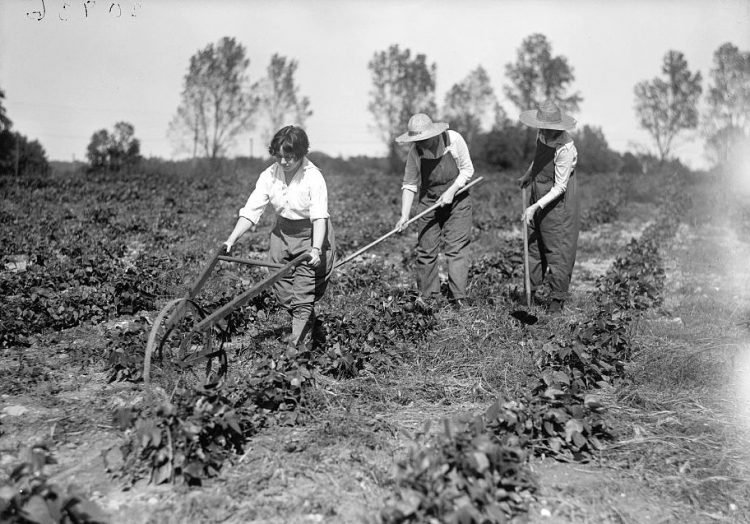 Girl Scout Farmerettes harvesting crops 1919