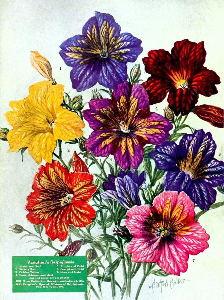 Growing flowers in World War II victory gardens