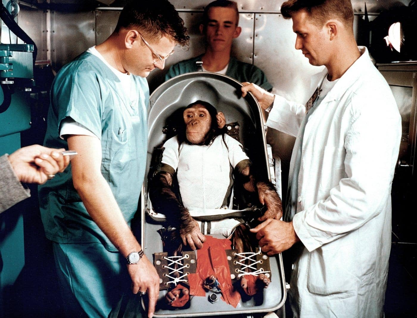 Ham the Space Chimp