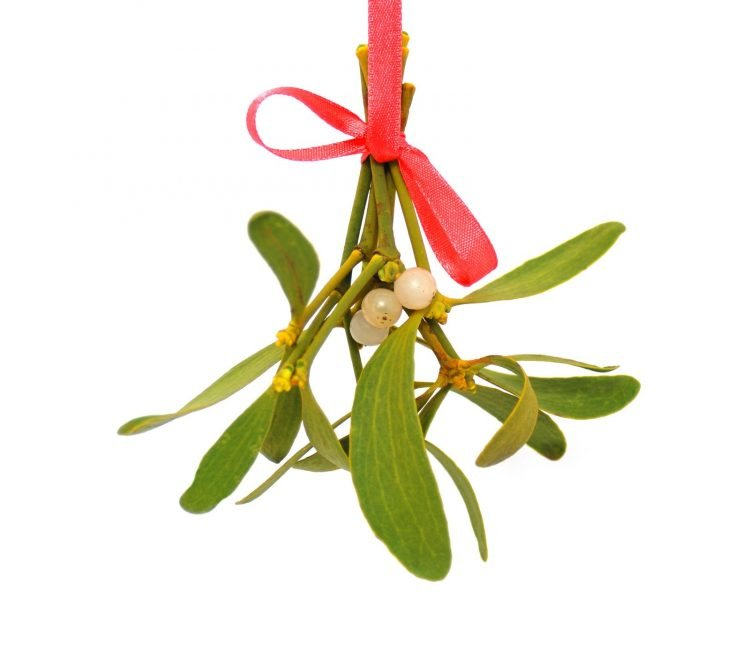 Hanging the mistletoe at Christmas