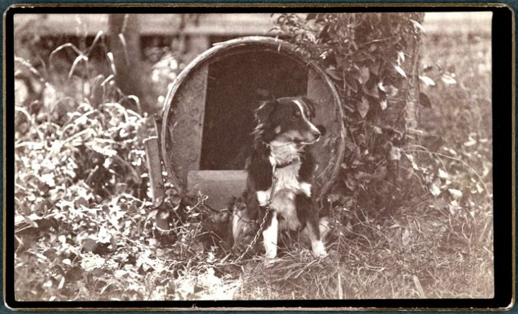 Honey - dog of Photographer Peter Britt 1800s