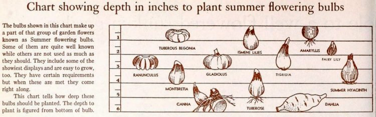 How deep to plant blubs in your garden
