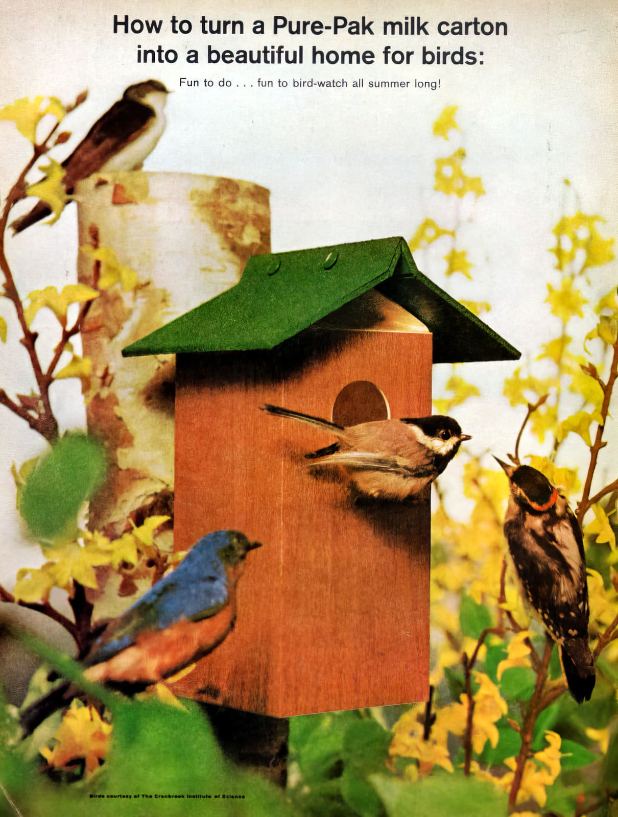 How to make a milk carton bird house the retro way