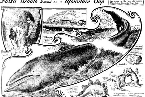 Huge fossilized whale found on a California mountaintop (1899)