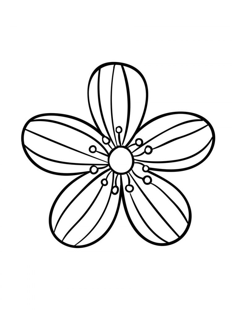 Large Print Adult Coloring Book 2 Big, Beautiful & Simple Flowers (3)