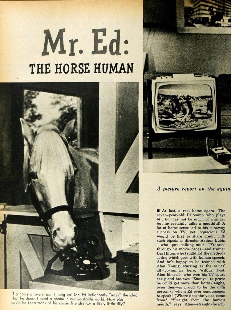 Mister Ed - 1950s TV show (2)