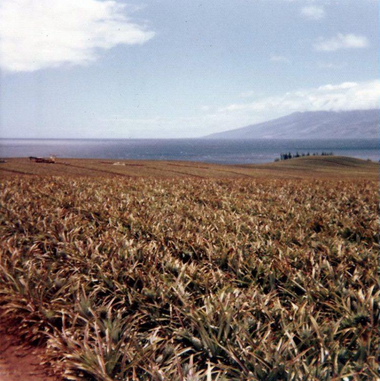 Old pineapple fields near Kapalua with view of Molokai - 1970s