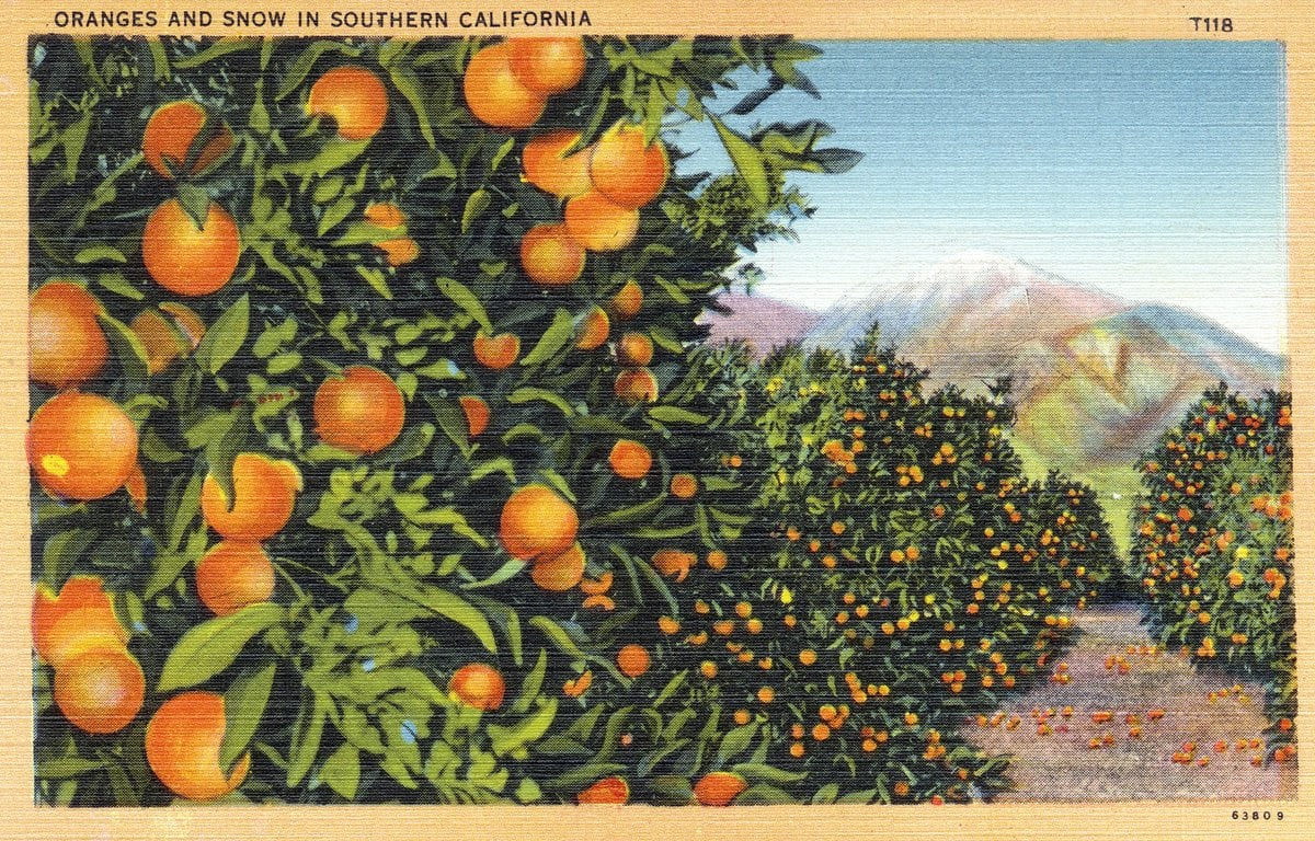 Oranges and snow in Southern California - Vintage postcard from 1930s-1940s