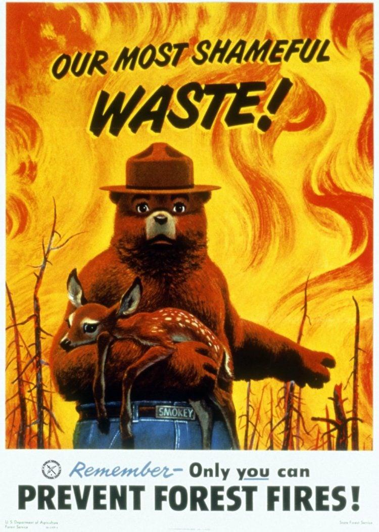 Our most shameful waste - Forest fires