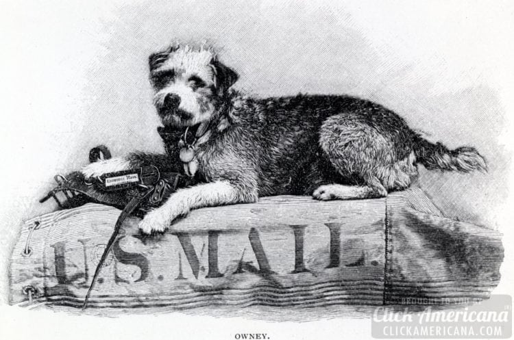 Owney the dog on a US MAIL bag