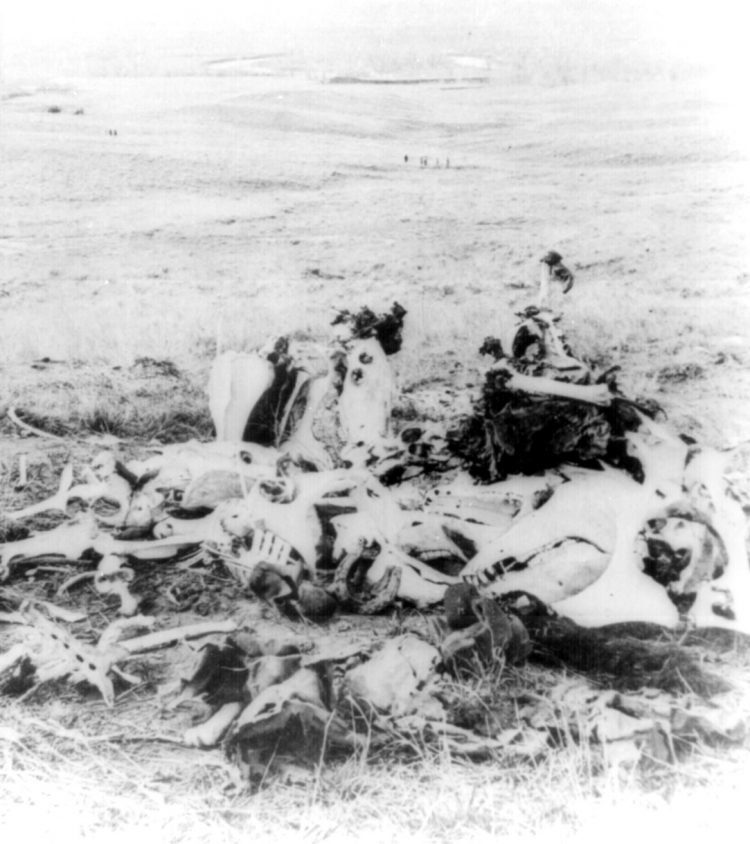 Piles of bones after Custer's Last Stand