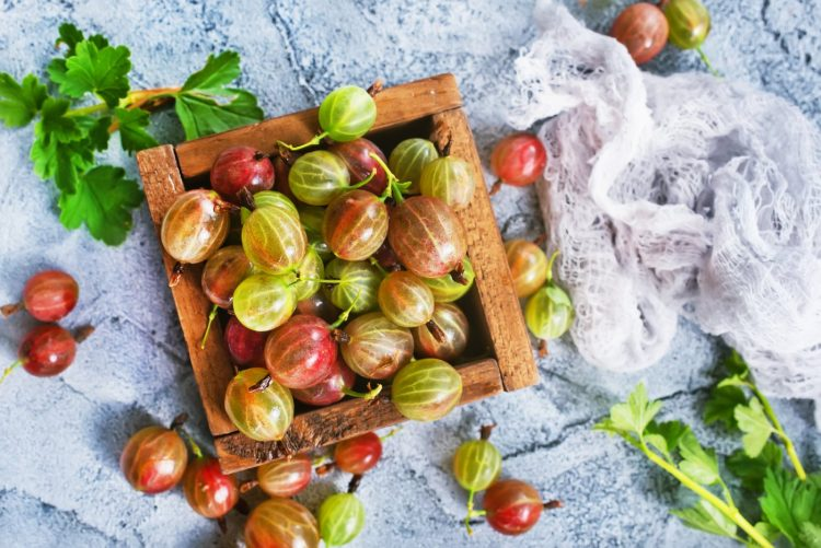 Pink and green gooseberries