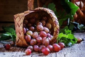 Pink gooseberries