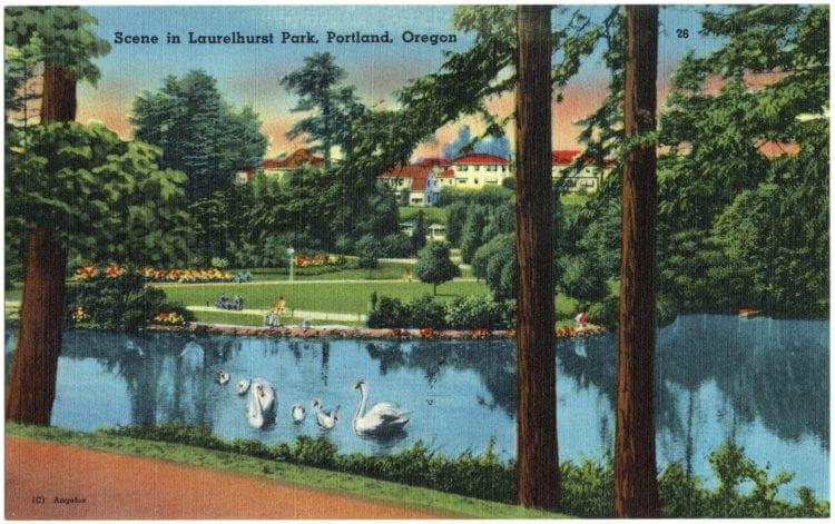 Scene in Laurelhurst Park, Portland, Oregon