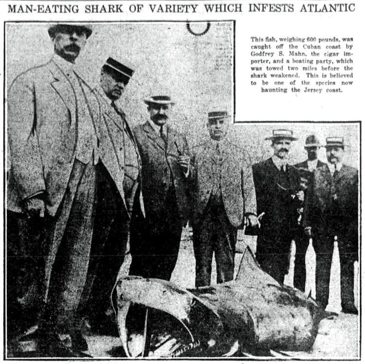 Shark attacks on the New Jersey coast 1916