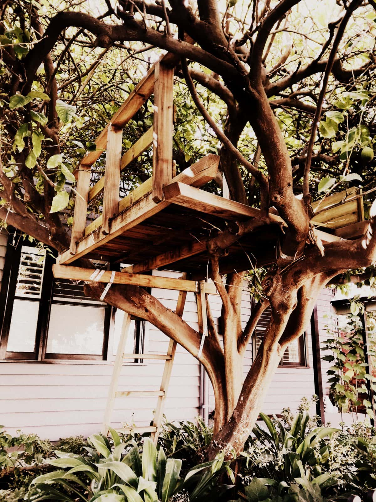 Small vintage treehouse with wooden ladder