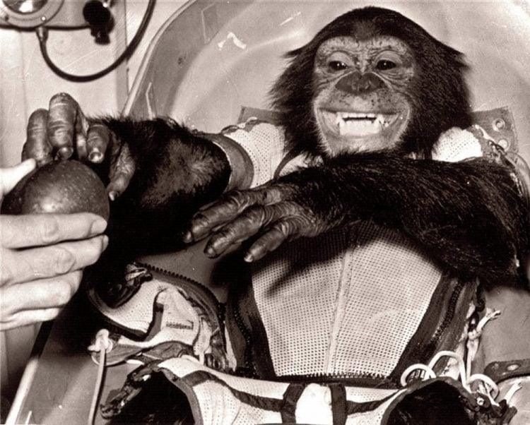 Space Chimp - Astronaut Ham