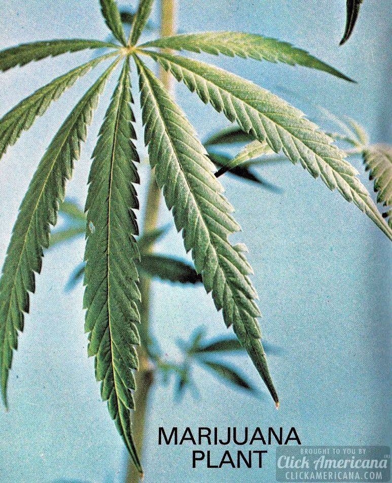 Booklet: New facts about marijuana (1970)