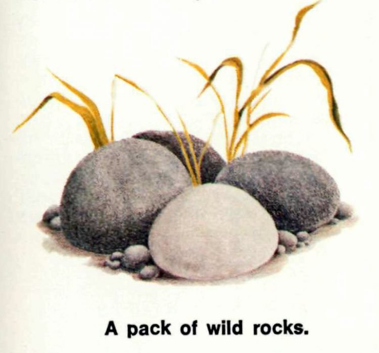 The care and training of your PET ROCK - 1970s manual excerpt (1)